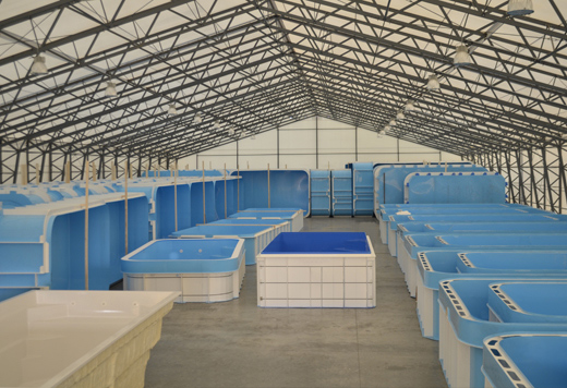 Albixon manufacturer of swimming pools and enclosures for Swimming pool manufacturers